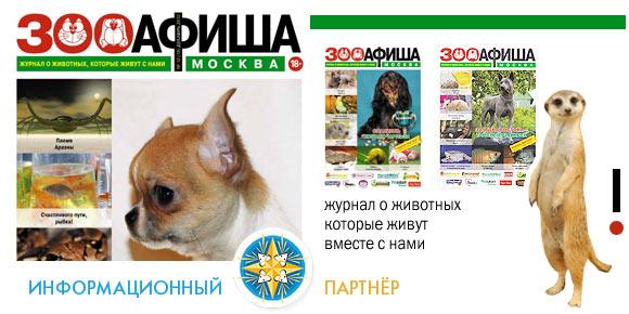 adv-infs-zooafisha-580