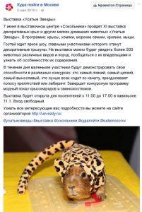 Куда пойти в Москве - Усатые Звезды-XV