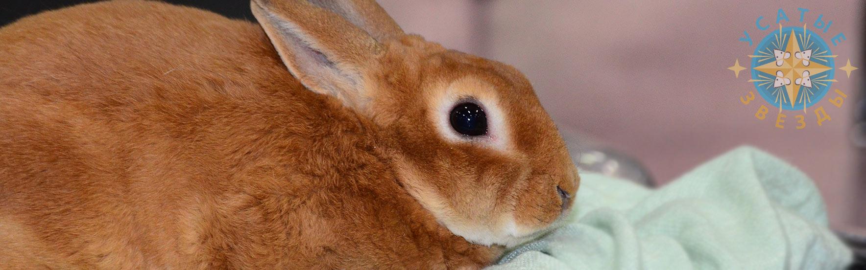 Декоративные кролики