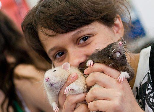 Всемирный день крысы
