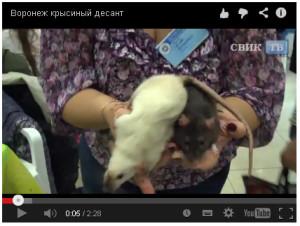 СВИК-ТВ Воронеж. Телевизионный репортаж о выставке, октябрь 2013
