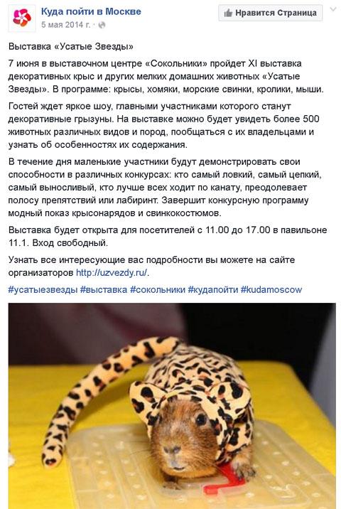 Kuda Moscow. Усатые Звезды-XV