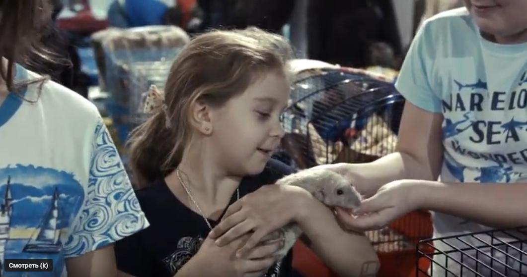 Телеканал «Домашние животные» о выставке Усатые Звёзды XXI